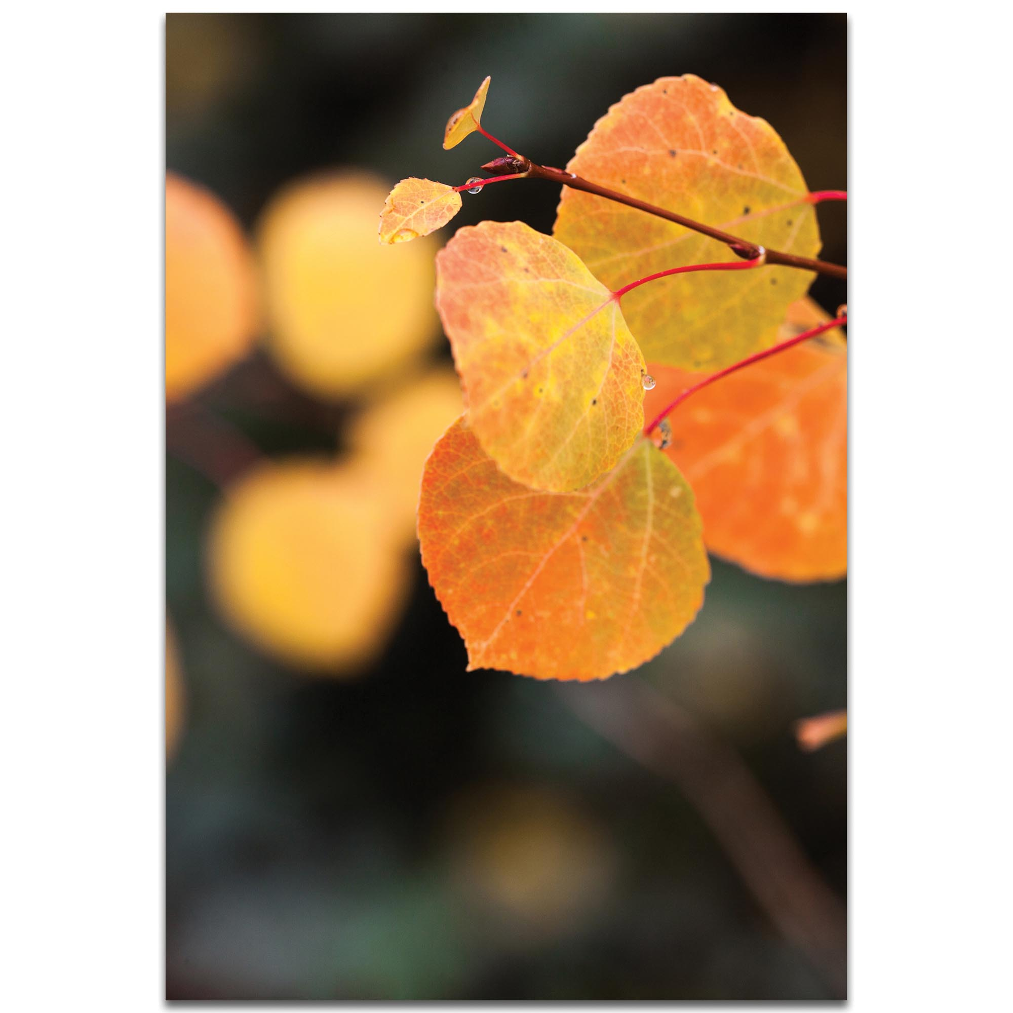 Nature Photography 'Changing Leaves' - Autumn Leaves Art on Metal or Plexiglass