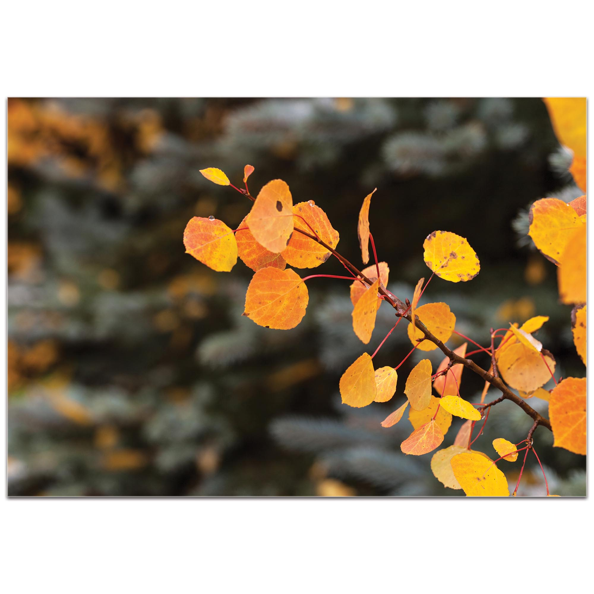 Nature Photography 'Autumn Branch' - Autumn Leaves Art on Metal or Plexiglass - Image 2