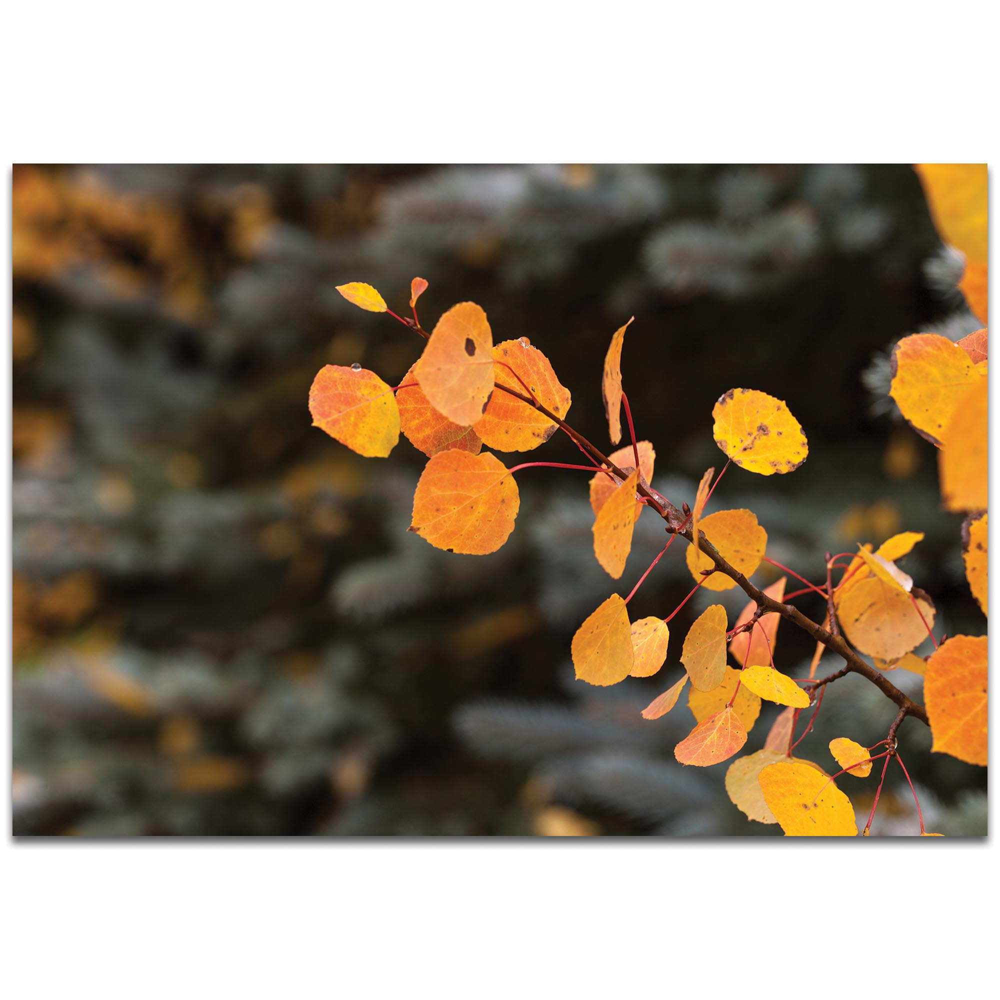 Nature Photography 'Autumn Branch' - Autumn Leaves Art on Metal or Plexiglass