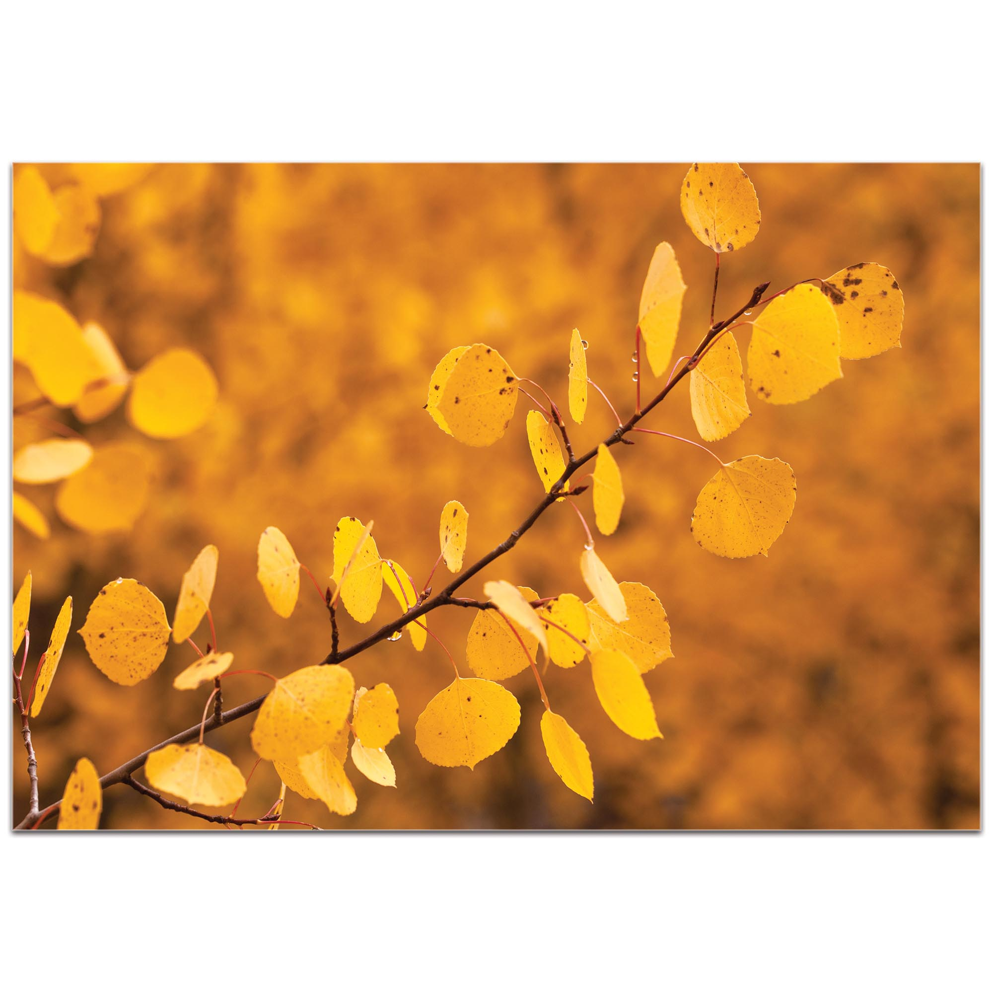 Nature Photography 'Yellow Leaves' - Autumn Leaves Art on Metal or Plexiglass - Image 2