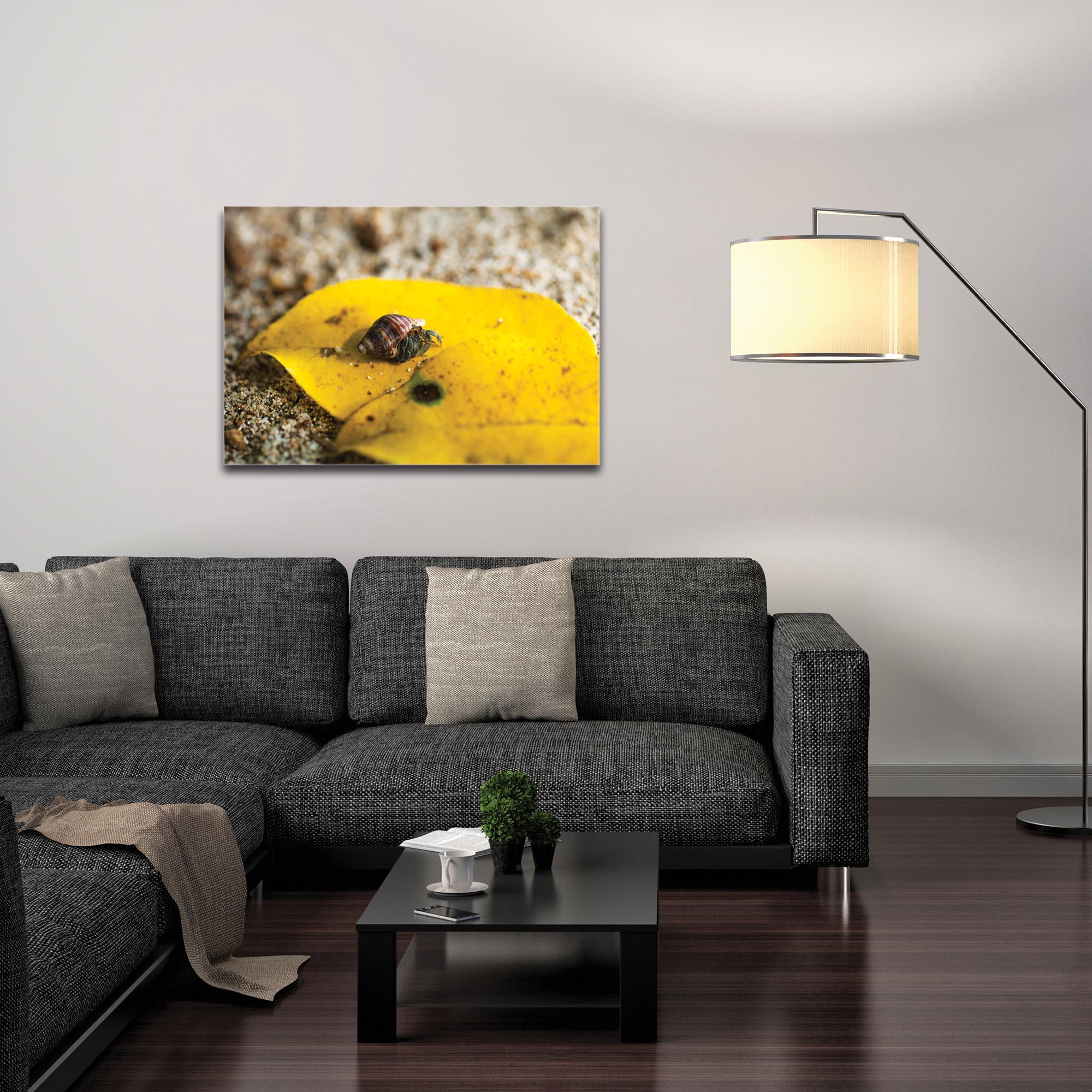Nature Photography 'Hermit Life' - Hermit Crab Art on Metal or Plexiglass - Image 3