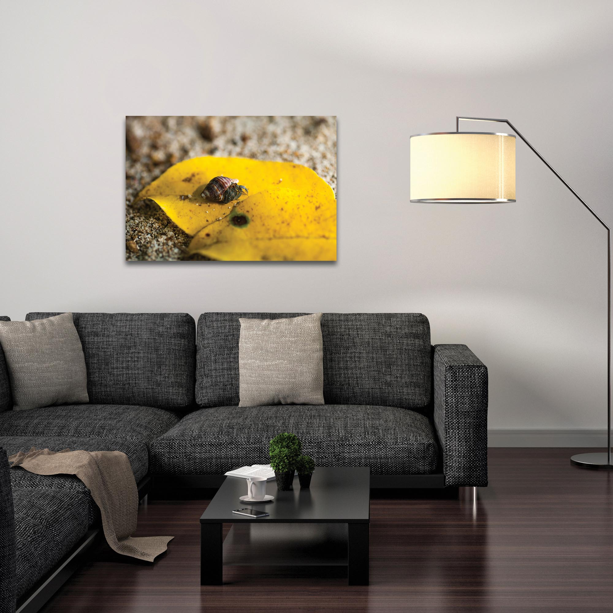 Nature Photography 'Hermit Life' - Hermit Crab Art on Metal or Plexiglass - Lifestyle View