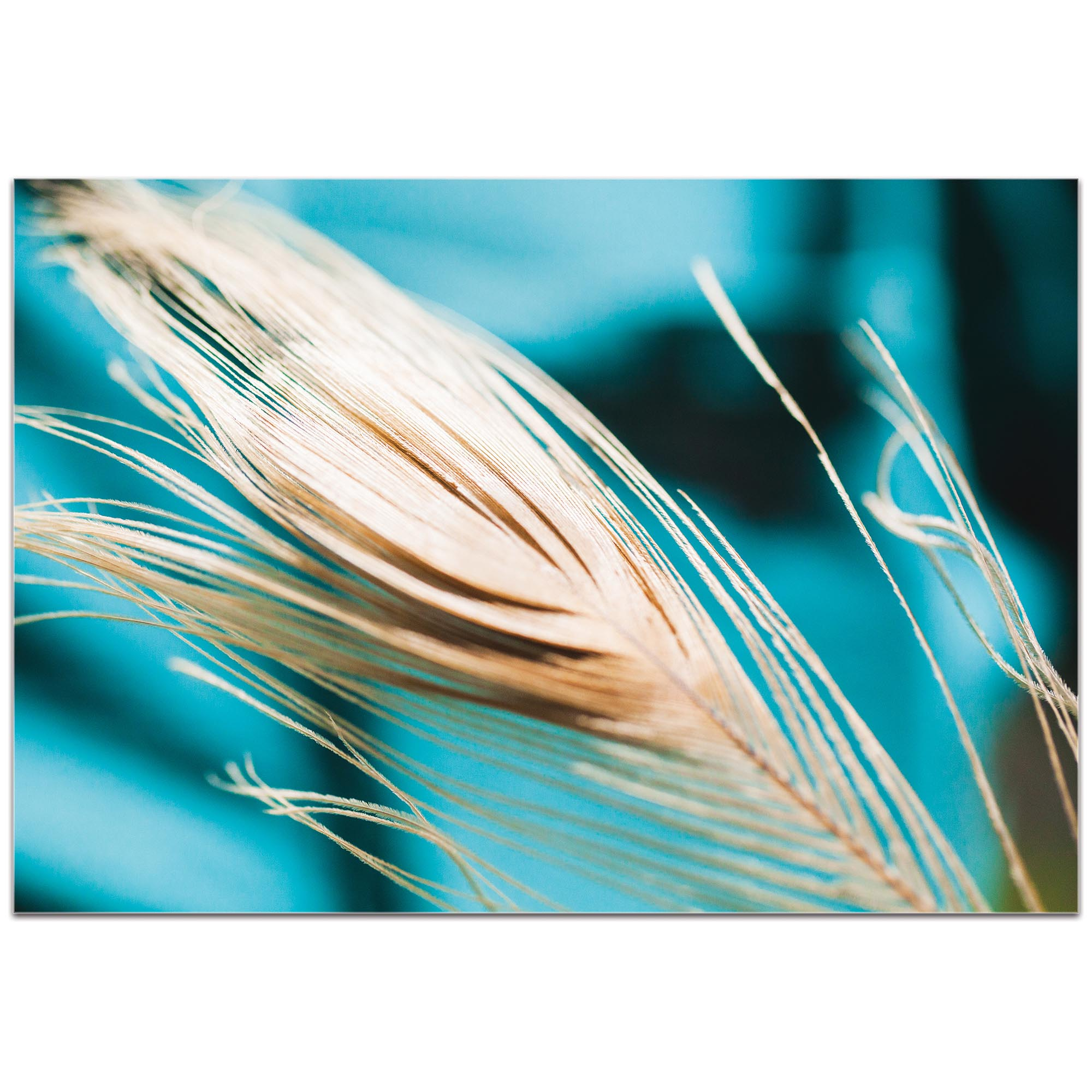 Nature Photography 'Turqoise Feather' - Bird Feathers Art on Metal or Plexiglass - Image 2