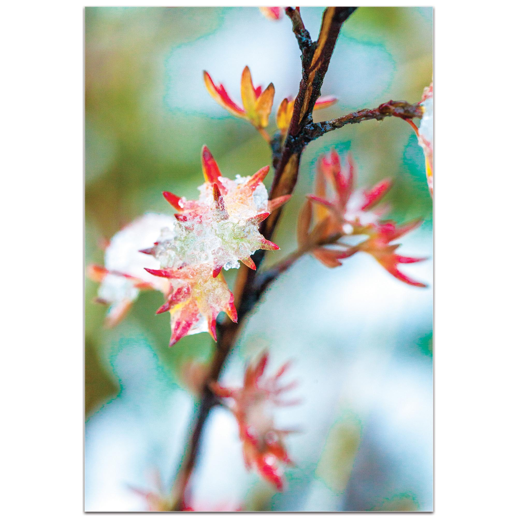 Nature Photography 'Icy Autumn' - Winter Blossom Art on Metal or Plexiglass - Image 2