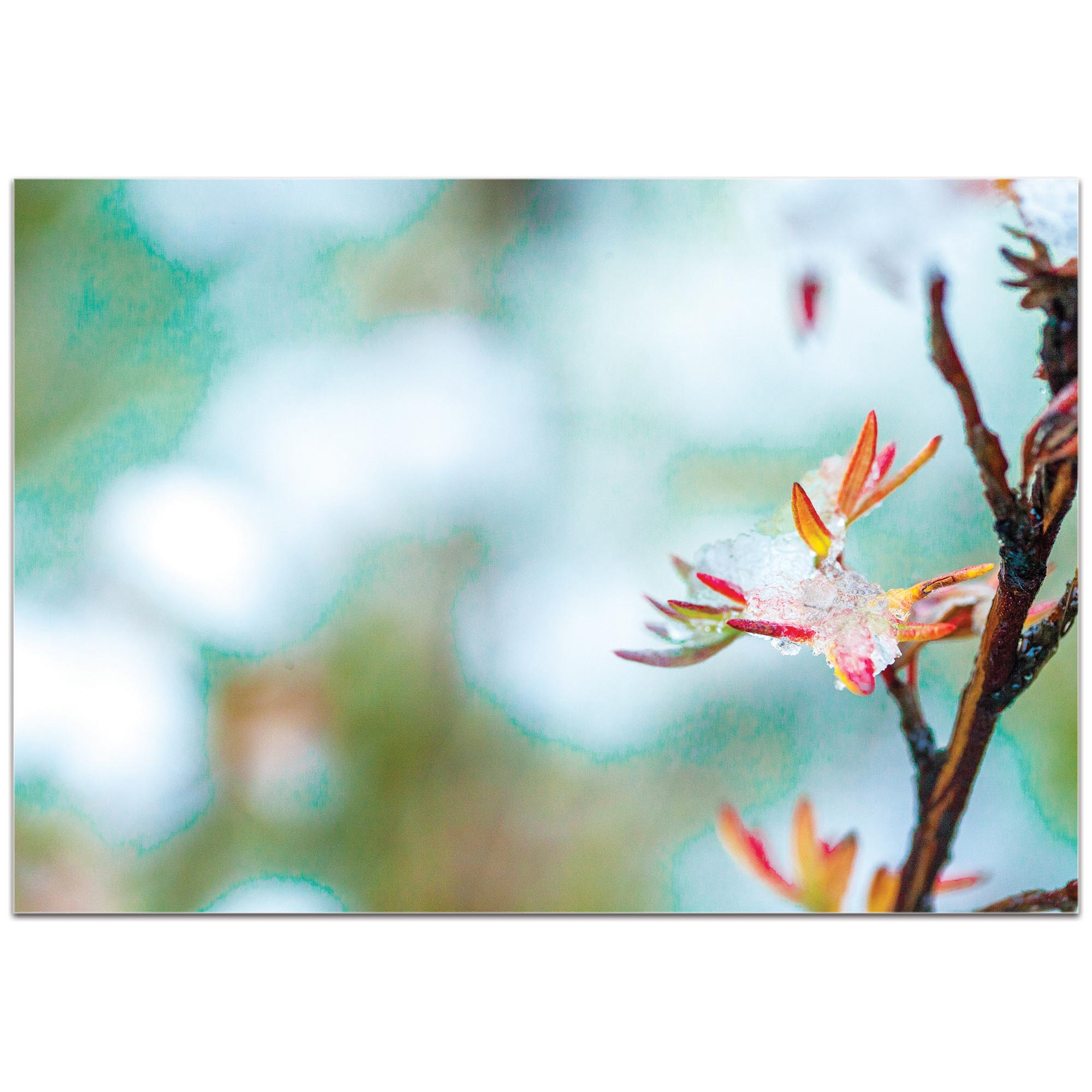 Nature Photography 'Icy Autumn v2' - Winter Blossom Art on Metal or Plexiglass - Image 2
