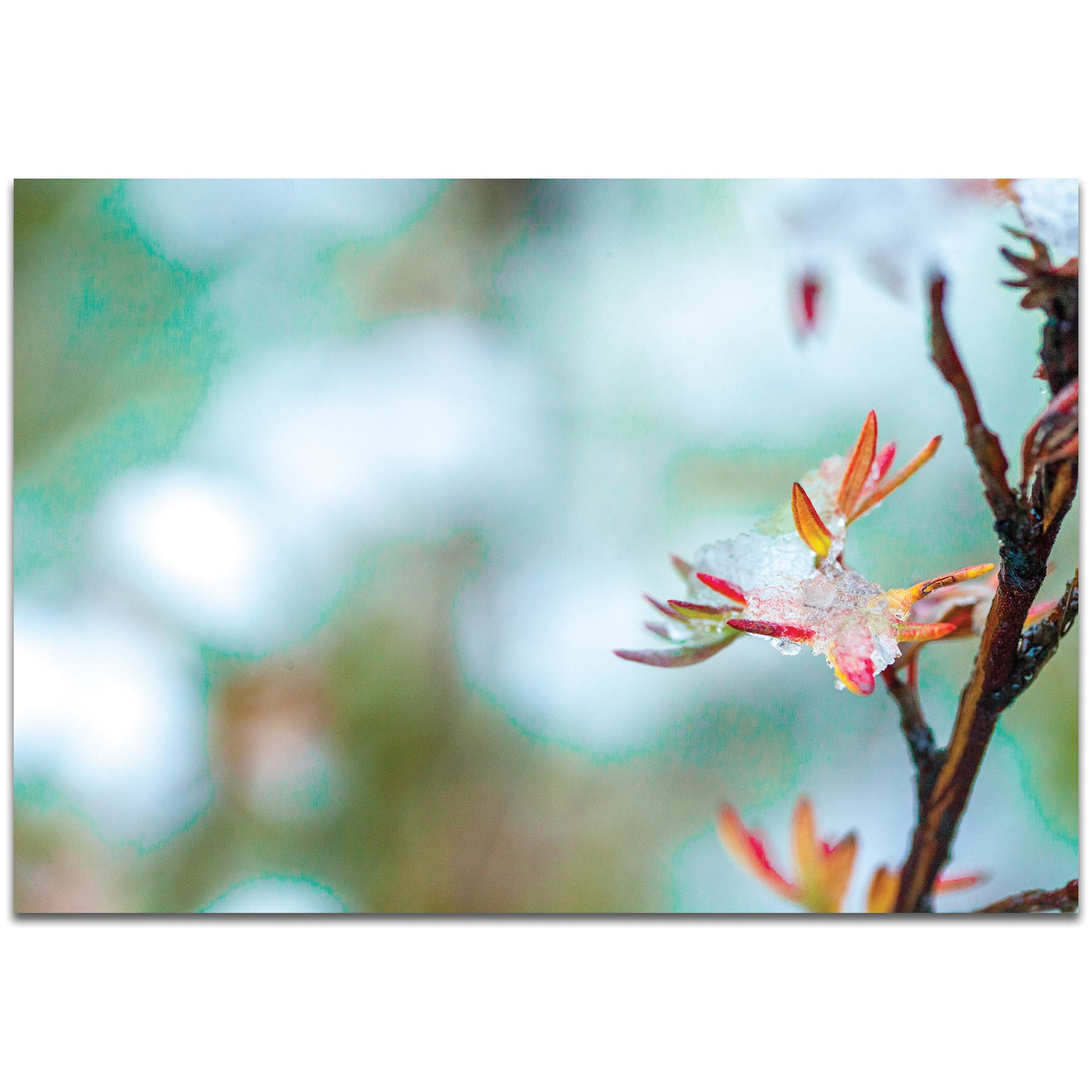 Nature Photography 'Icy Autumn v2' - Winter Blossom Art on Metal or Plexiglass
