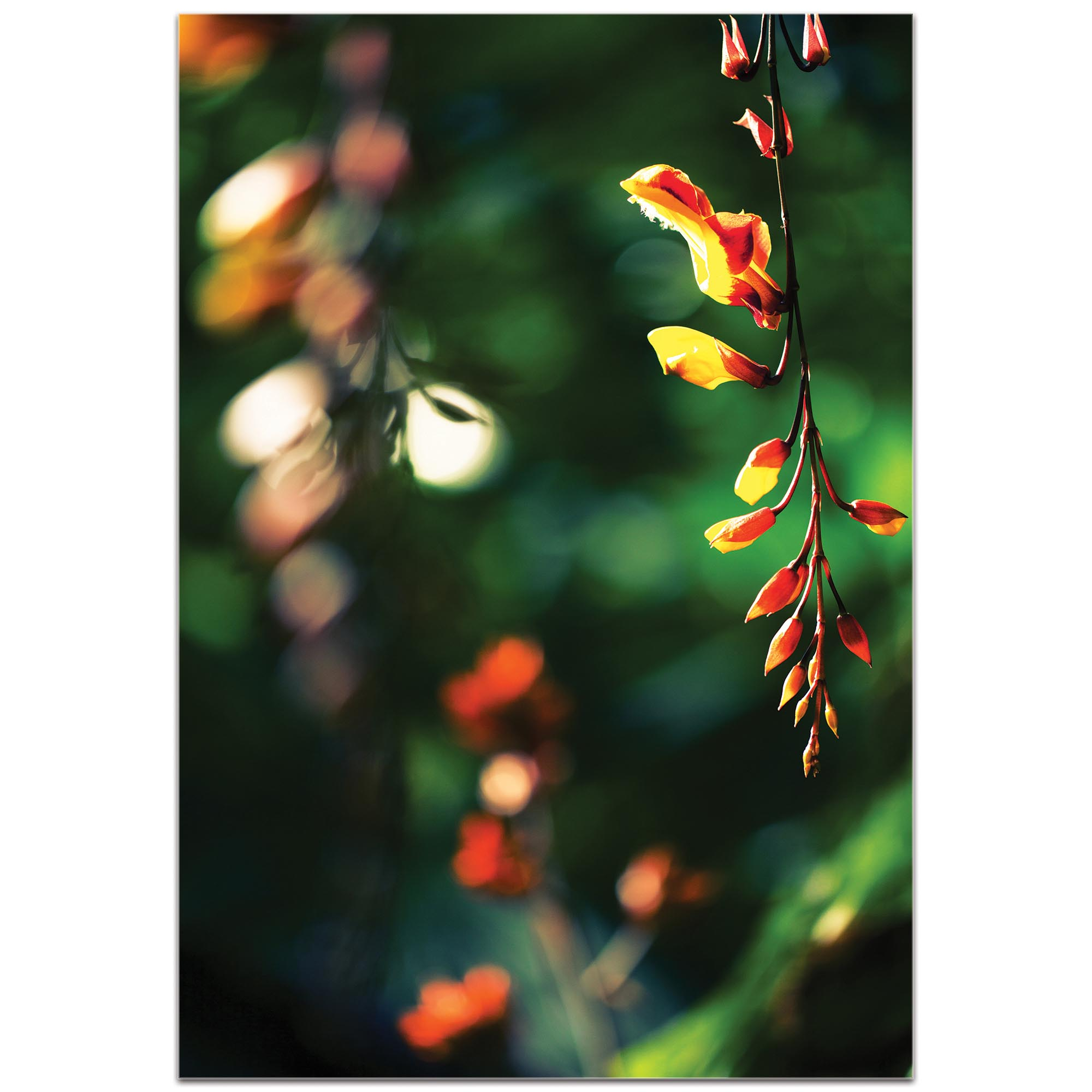 Nature Photography 'Hanging Flowers' - Flower Blossom Art on Metal or Plexiglass - Image 2