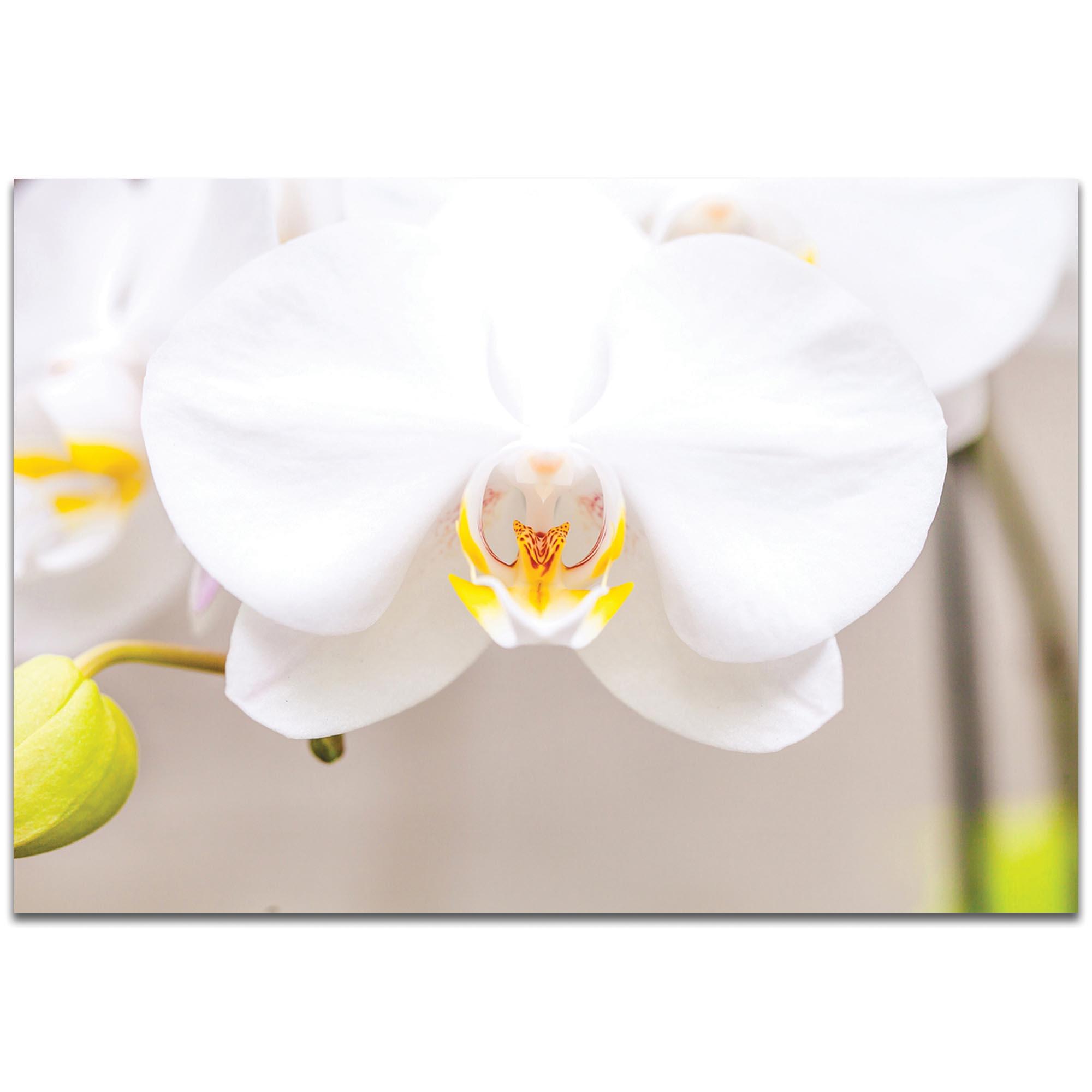 Nature Photography 'White Bloom' - Flower Blossom Art on Metal or Plexiglass