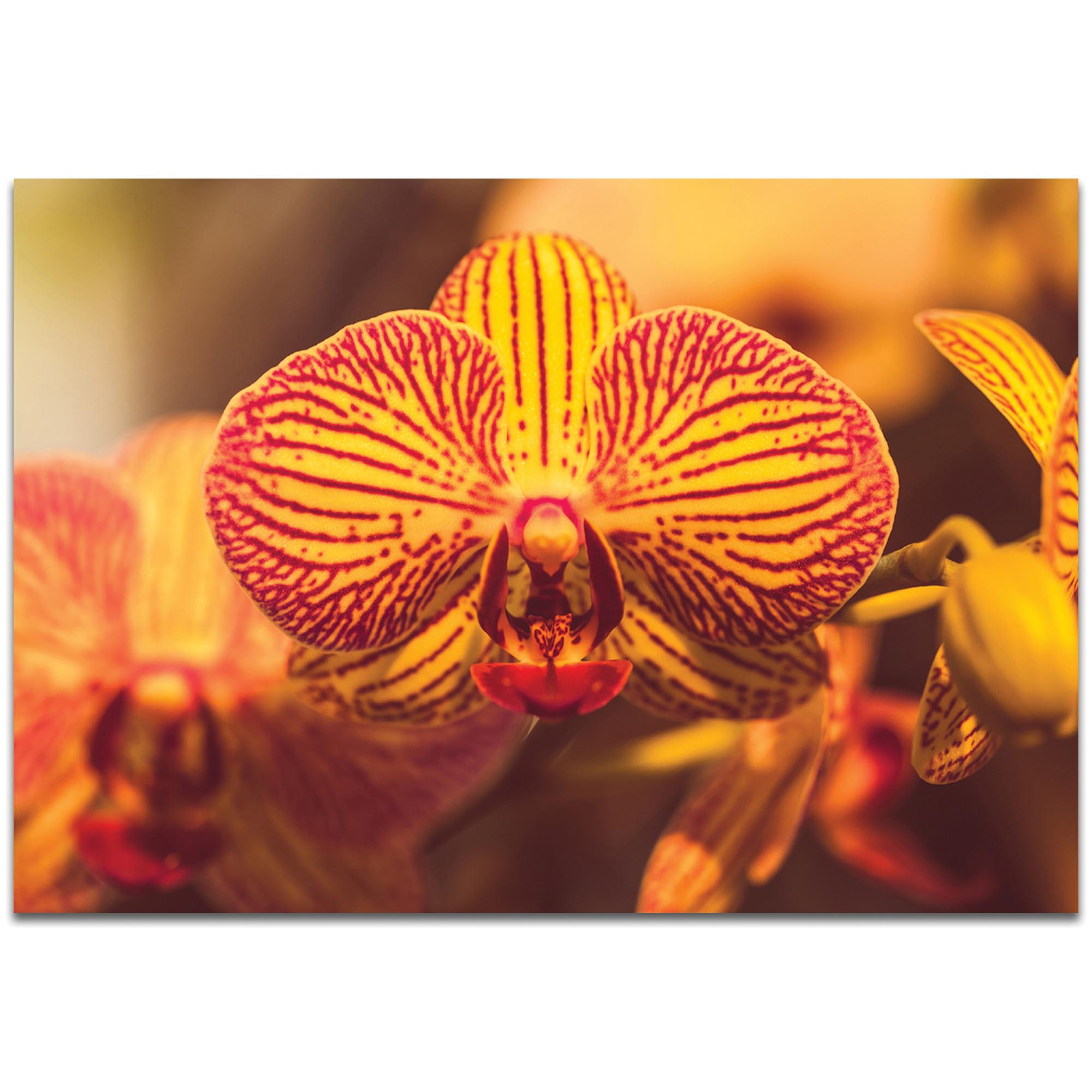 Nature Photography 'Sunset Bloom' - Flower Blossom Art on Metal or Plexiglass