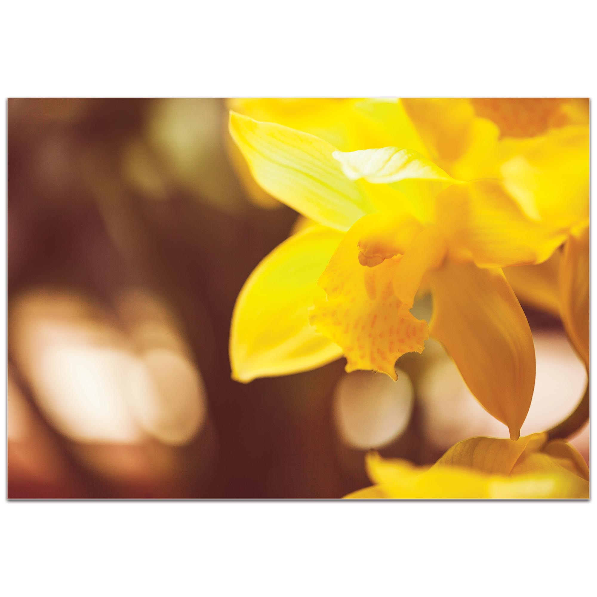 Nature Photography 'Golden Bloom' - Flower Blossom Art on Metal or Plexiglass - Image 2