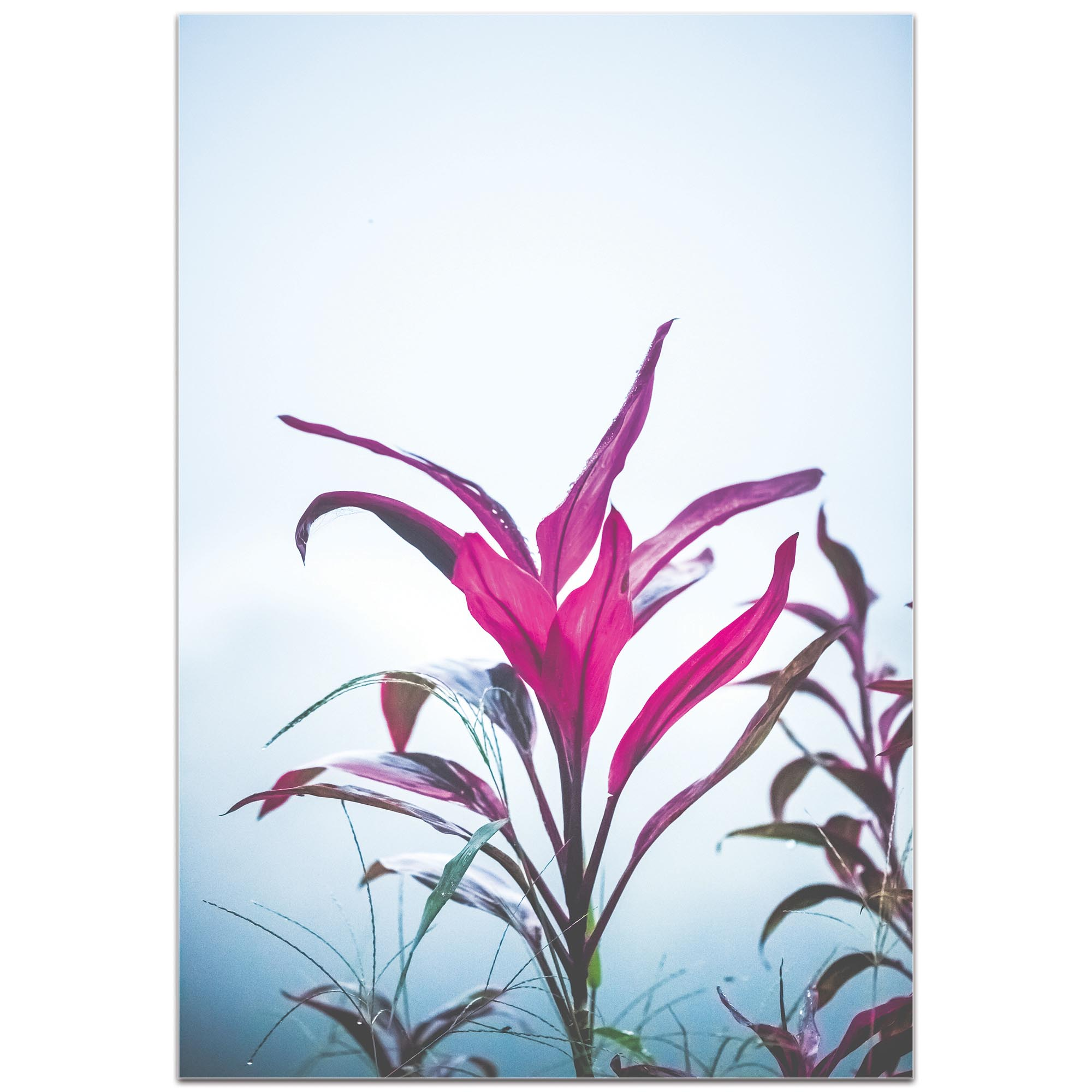 Nature Photography 'Magenta Leaves' - Flower Blossom Art on Metal or Plexiglass - Image 2