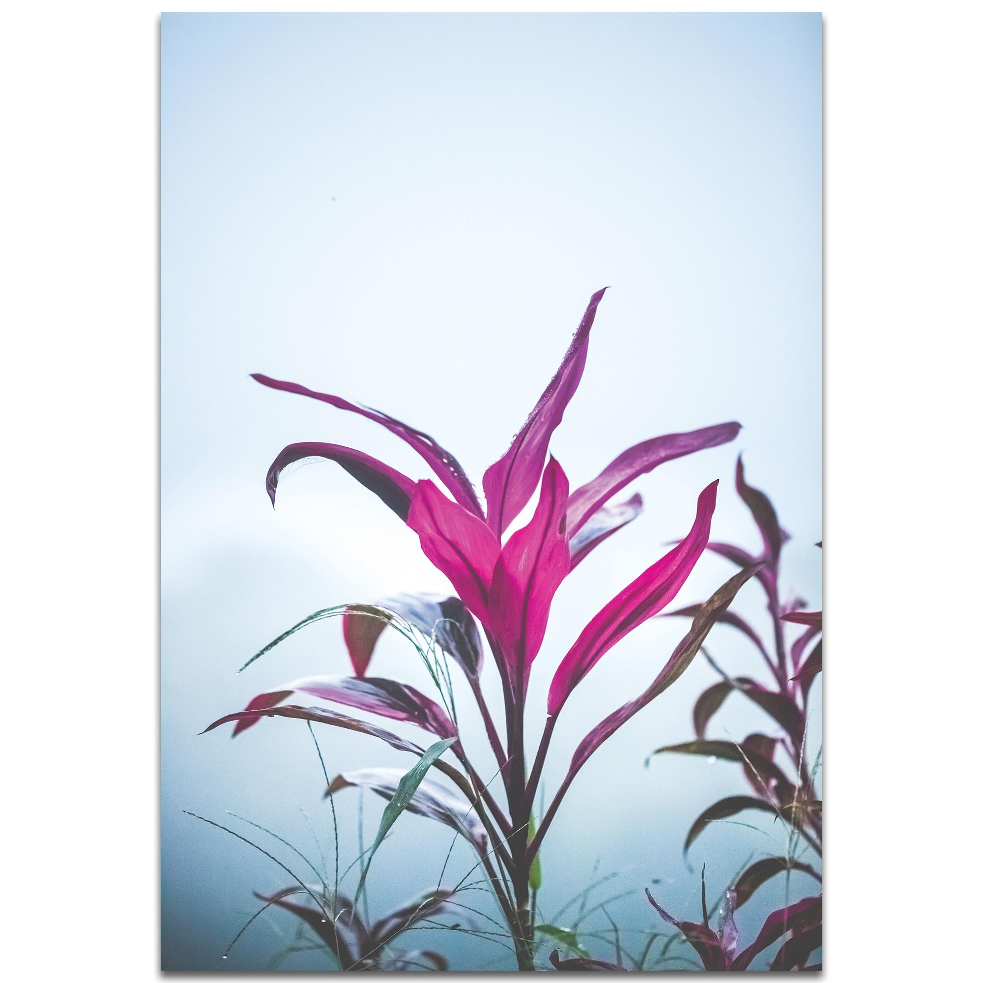 Nature Photography 'Magenta Leaves' - Flower Blossom Art on Metal or Plexiglass