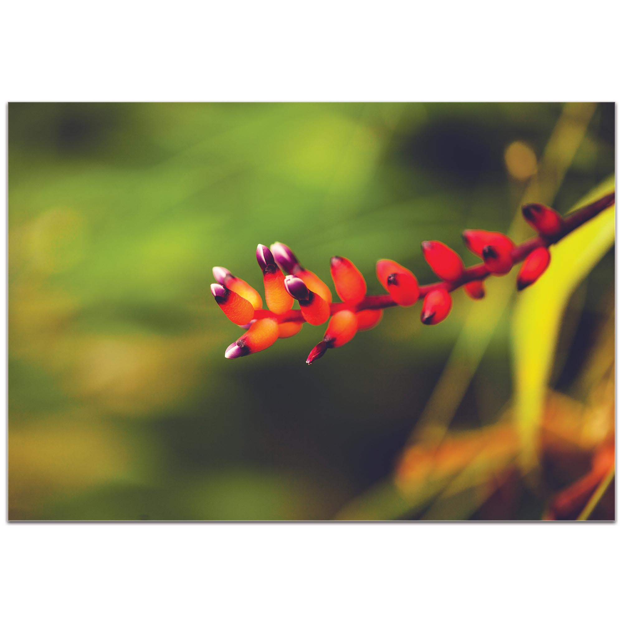Nature Photography 'Ready to Bloom' - Flower Blossom Art on Metal or Plexiglass - Image 2
