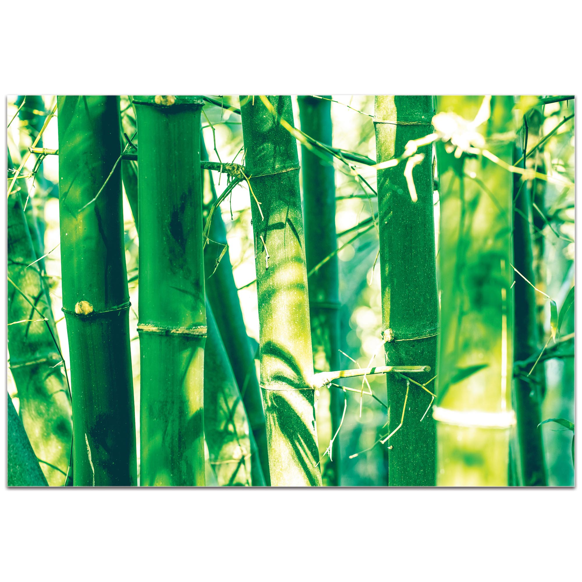 Asian Wall Art 'Bamboo Forest' - Bamboo Decor on Metal or Plexiglass - Image 2