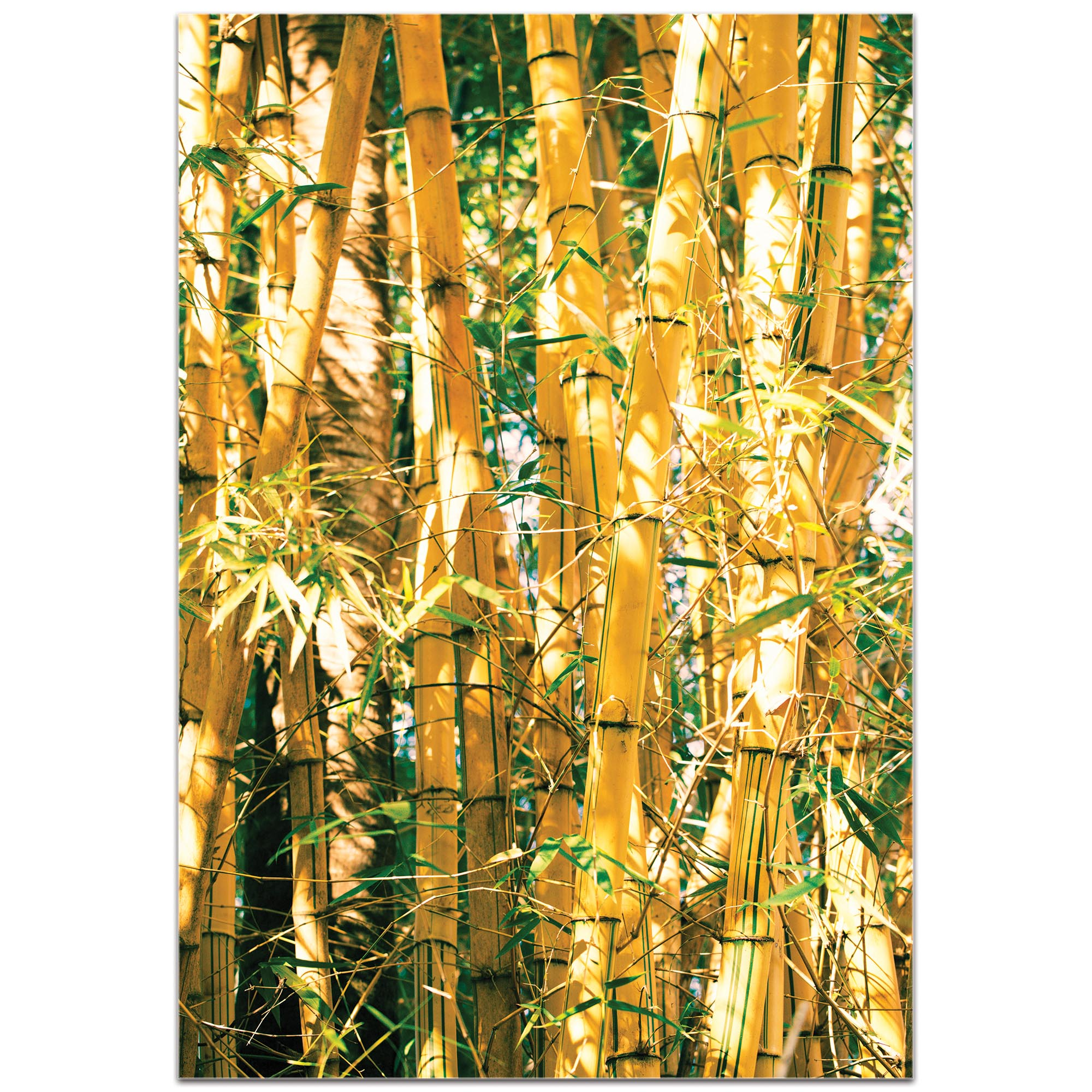 Asian Wall Art 'Bamboo Gold' - Bamboo Decor on Metal or Plexiglass - Image 2