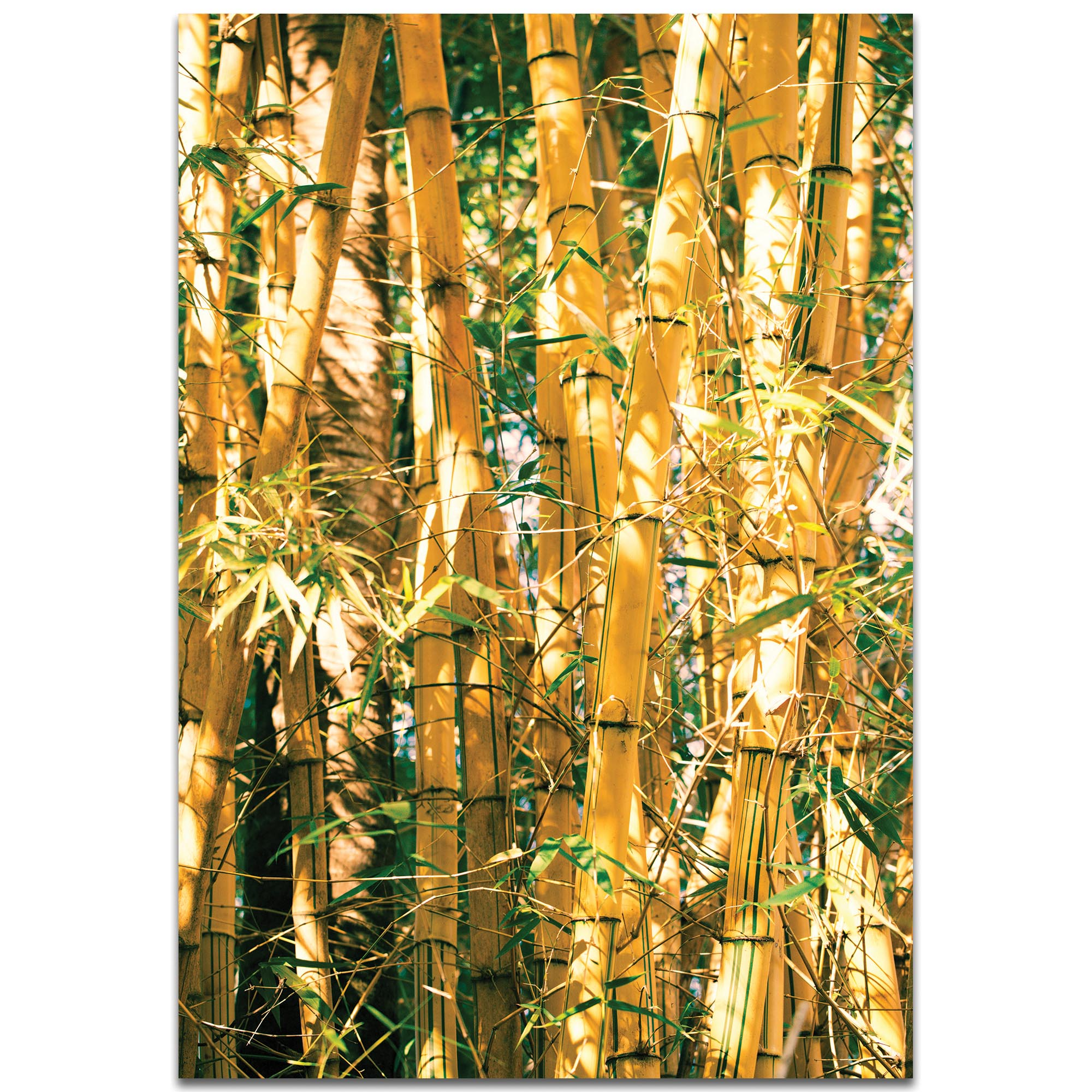 Metal Art Studio - Bamboo Gold by Meirav Levy - Nature Photography ...