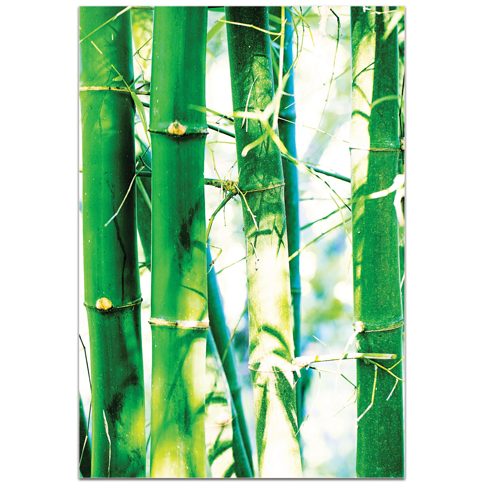 Asian Wall Art 'Bamboo Heights' - Bamboo Decor on Metal or Plexiglass - Image 2