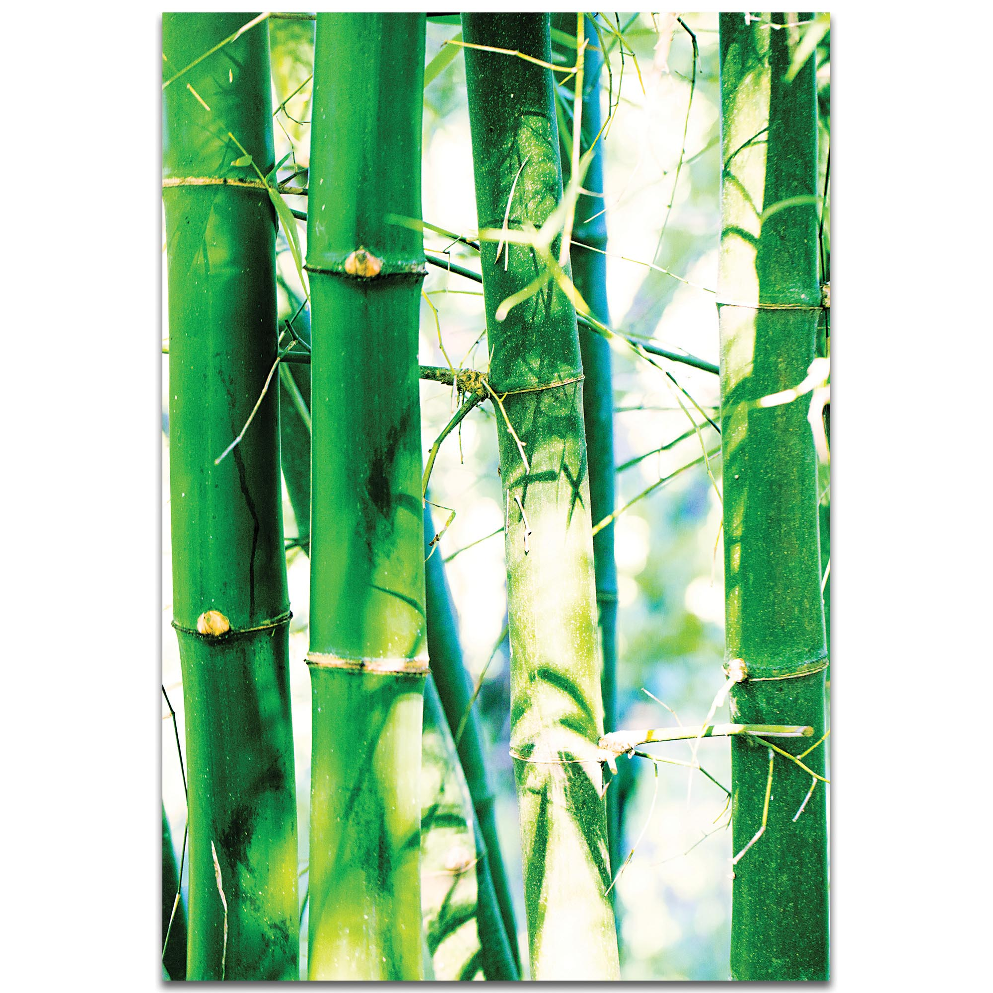 Asian Wall Art 'Bamboo Heights' - Bamboo Decor on Metal or Plexiglass