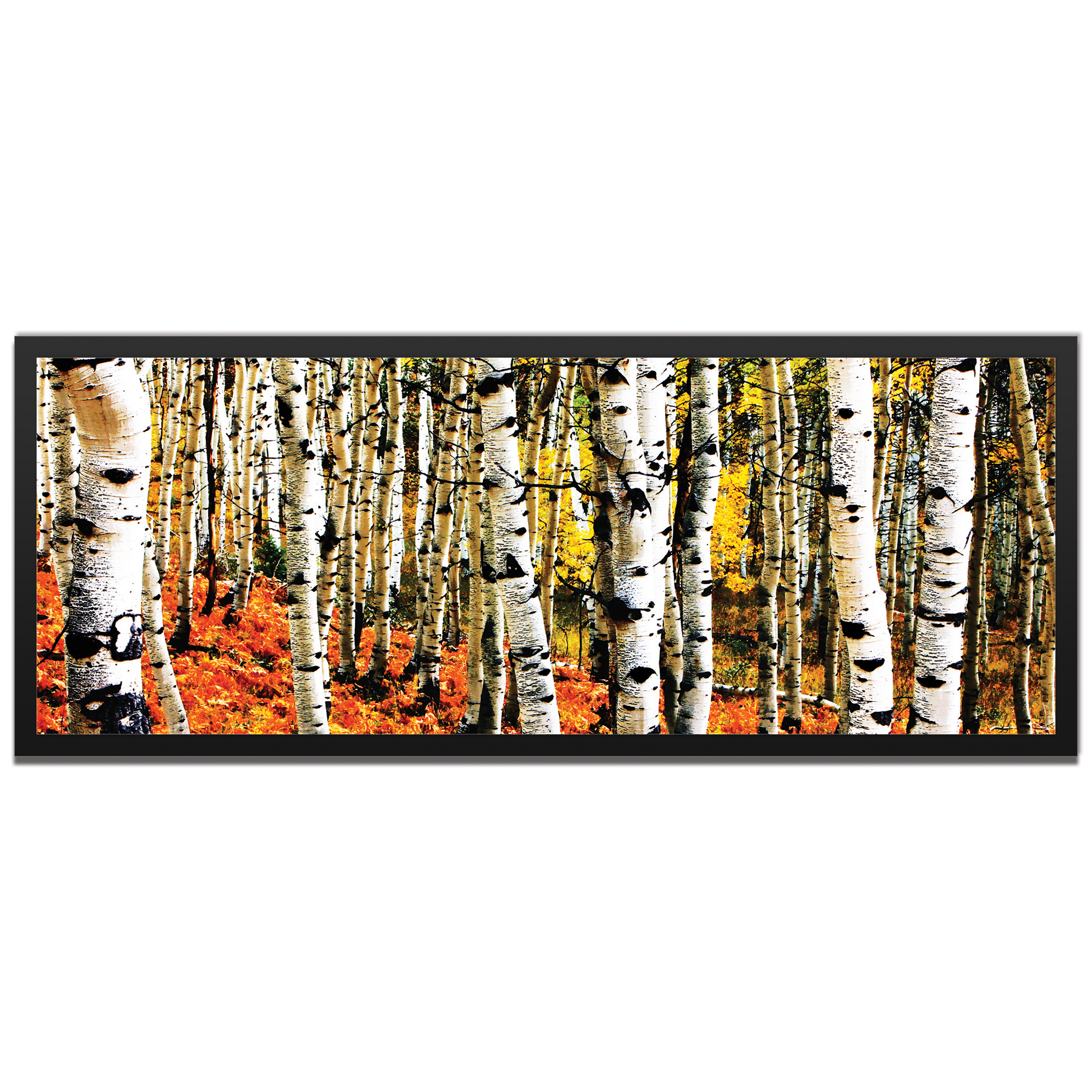 Eric Waddington 'Aspen Grove Framed' 48in x 19in Landscape Photography Trees Art on Colored Metal