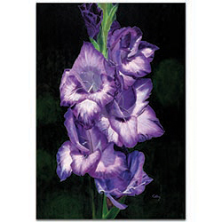 Traditional Wall Art Deep Purple Glads - Floral Decor on Metal or Plexiglass