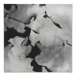 Flower - Black & White Flower Silhouette Wall Art