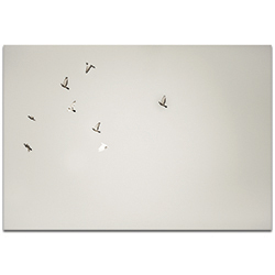 Minimalist Wall Art The Journey - Wildlife Decor on Metal or Plexiglass