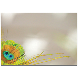 Contemporary Wall Art Peacock Corner - Wildlife Decor on Metal or Plexiglass