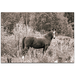Western Wall Art Equine Forest - Horses Decor on Metal or Plexiglass