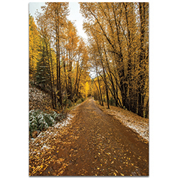 Landscape Photography Mountain Pass - Autumn Trees Art on Metal or Plexiglass