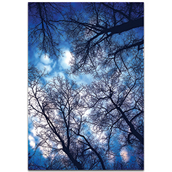 Landscape Photography Sky Vains - Winter Scene Art on Metal or Plexiglass
