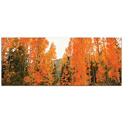 Landscape Photography Aspen Fire - Autumn Nature Art on Metal or Plexiglass