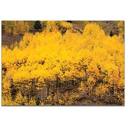 Landscape Photography Aspen Autumn - Autumn Nature Art on Metal or Plexiglass