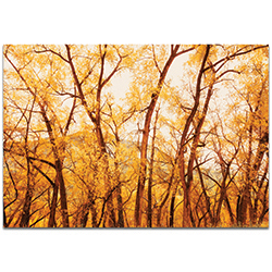 Landscape Photography Fall Trees - Autumn Nature Art on Metal or Plexiglass
