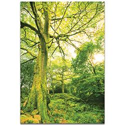 Landscape Photography Mossy Grove - Forest Scene Art on Metal or Plexiglass
