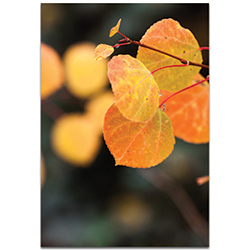 Nature Photography Changing Leaves - Autumn Leaves Art on Metal or Plexiglass