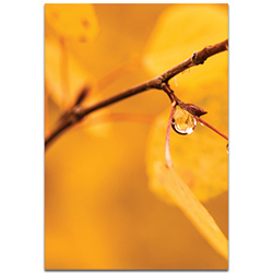 Nature Photography Golden Drop - Autumn Leaves Art on Metal or Plexiglass