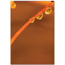 Nature Photography Morning Dew - Autumn Leaves Art on Metal or Plexiglass