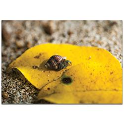 Nature Photography Hermit Life - Hermit Crab Art on Metal or Plexiglass