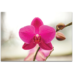 Nature Photography Magenta Bloom - Flower Blossom Art on Metal or Plexiglass