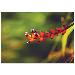 Nature Photography Ready to Bloom - Flower Blossom Art on Metal or Plexiglass