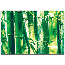 Asian Wall Art Bamboo Forest - Bamboo Decor on Metal or Plexiglass