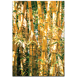 Asian Wall Art Bamboo Gold - Bamboo Decor on Metal or Plexiglass