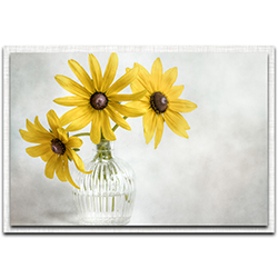 Mandy Disher Rudbeckia 32in x 22in Modern Farmhouse Floral on Metal