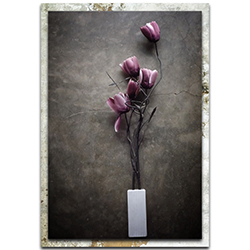 kahar lagaa The Purple Tulip 22in x 32in Modern Farmhouse Floral on Metal