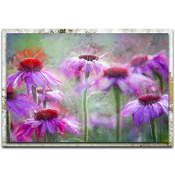 Ulrike Eisenmann Cone Flowers in the Morning Light 32in x 22in Modern Farmhouse Floral on Metal