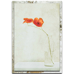 Delphine Devos Two Poppies in a Bottle 22in x 32in Modern Farmhouse Floral on Metal