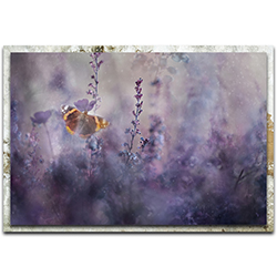 Heidi Westum In a Meadow ll 32in x 22in Modern Farmhouse Floral on Metal