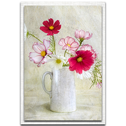 Mandy Disher Cosmos Carnival 22in x 32in Modern Farmhouse Floral on Metal