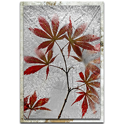 Secundino Losada Red Maple 22in x 32in Modern Farmhouse Floral on Metal