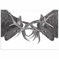 Antler to Antler by Jim Cumming - Deer Antlers Art on Metal or Acrylic